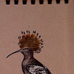Eberhardt Press - Hoopoe Notepad
