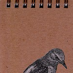 Eberhardt Press - Rock Thrush Notepad