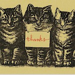 Hope Amico - Thank You Kittens Postcard